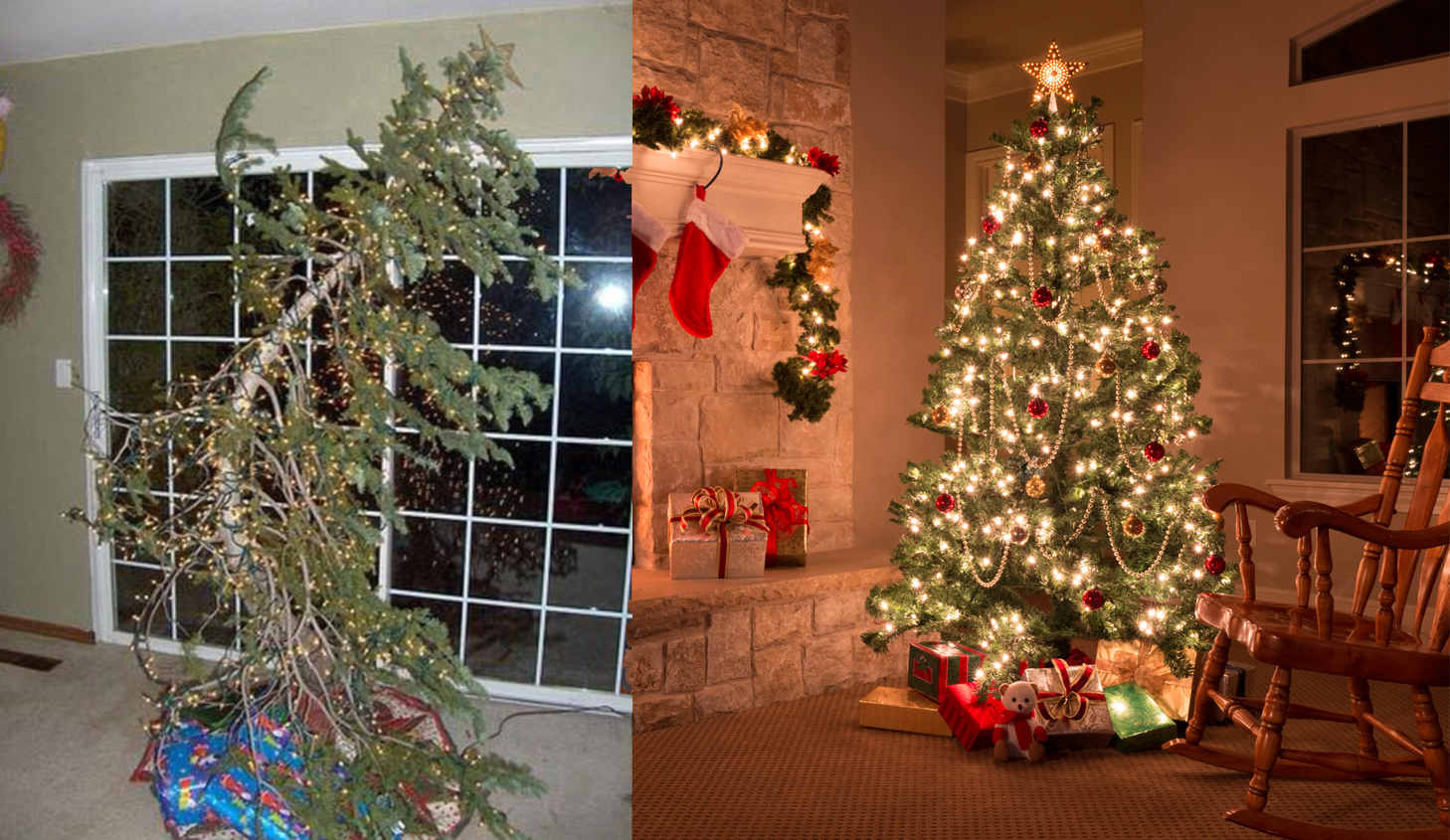 best christmas trees